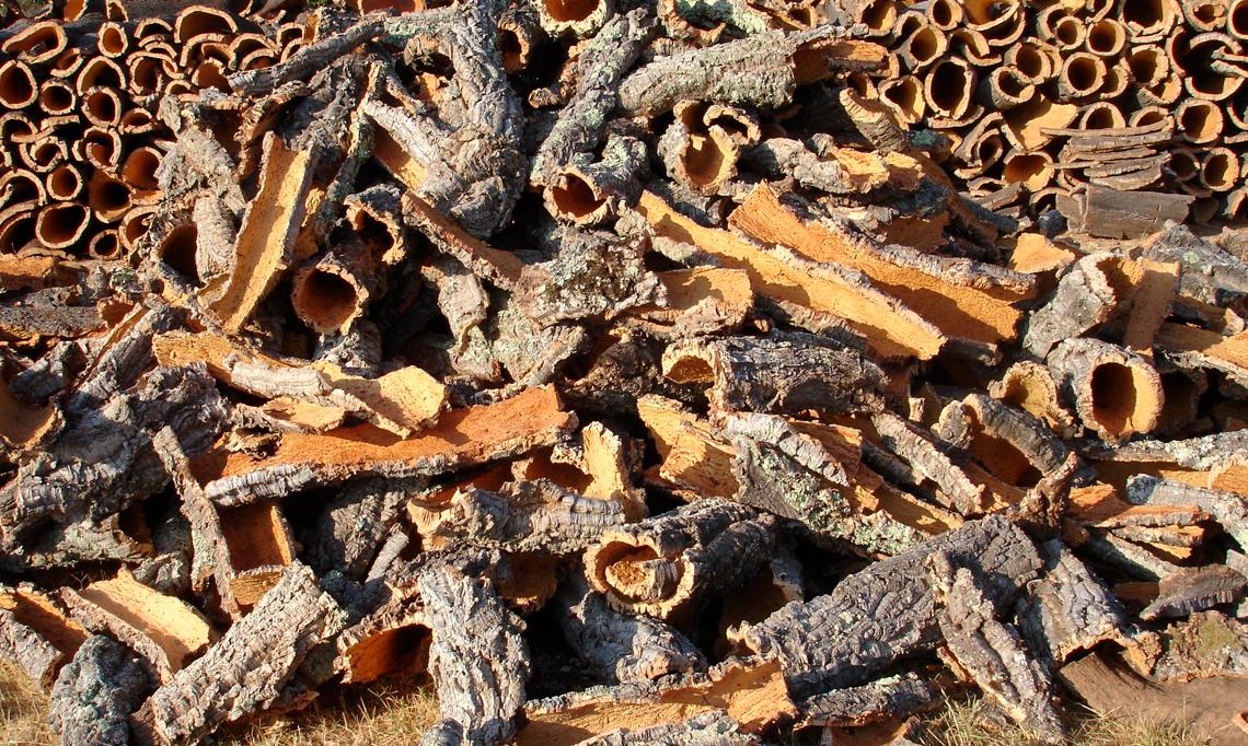 Curso de extracción del corcho con nuevas tecnologías en Extremadura